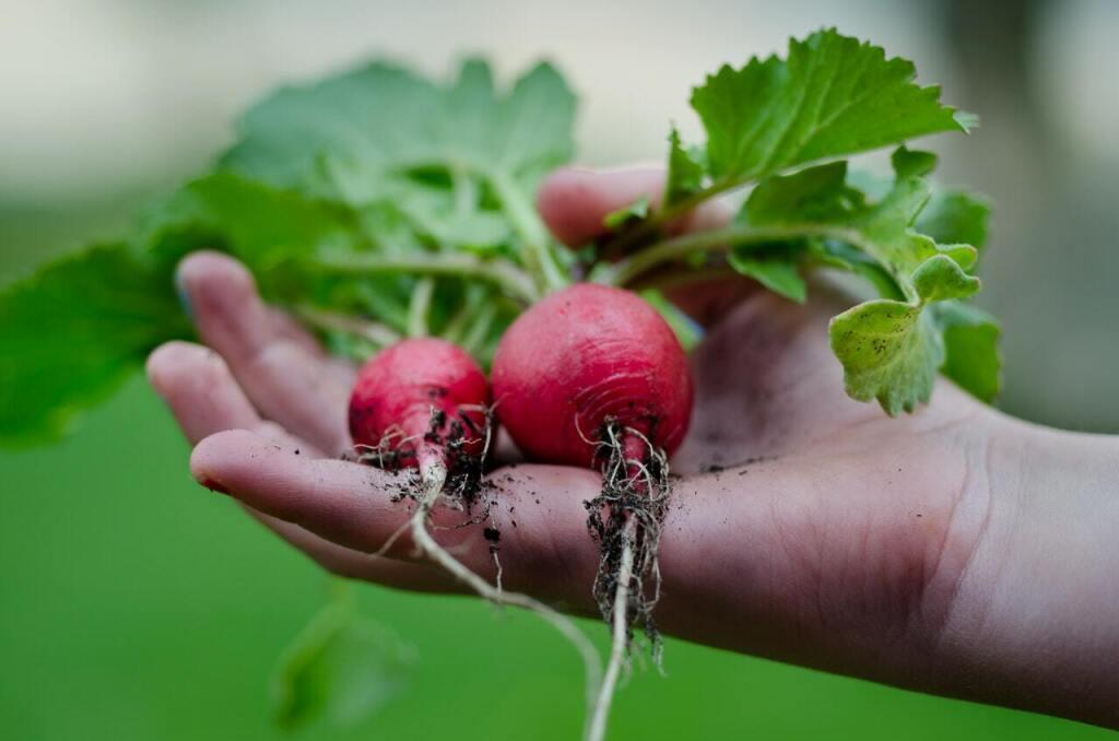Тюменские дачники занялись весенней рассадой