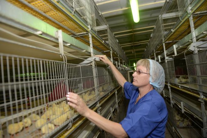Тюменская птицефабрика вложит врасширение производства неменее млрд руб.