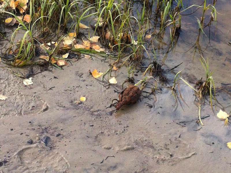 ВТюмени наберегу реки отыскали гранату Сегодня в12:25