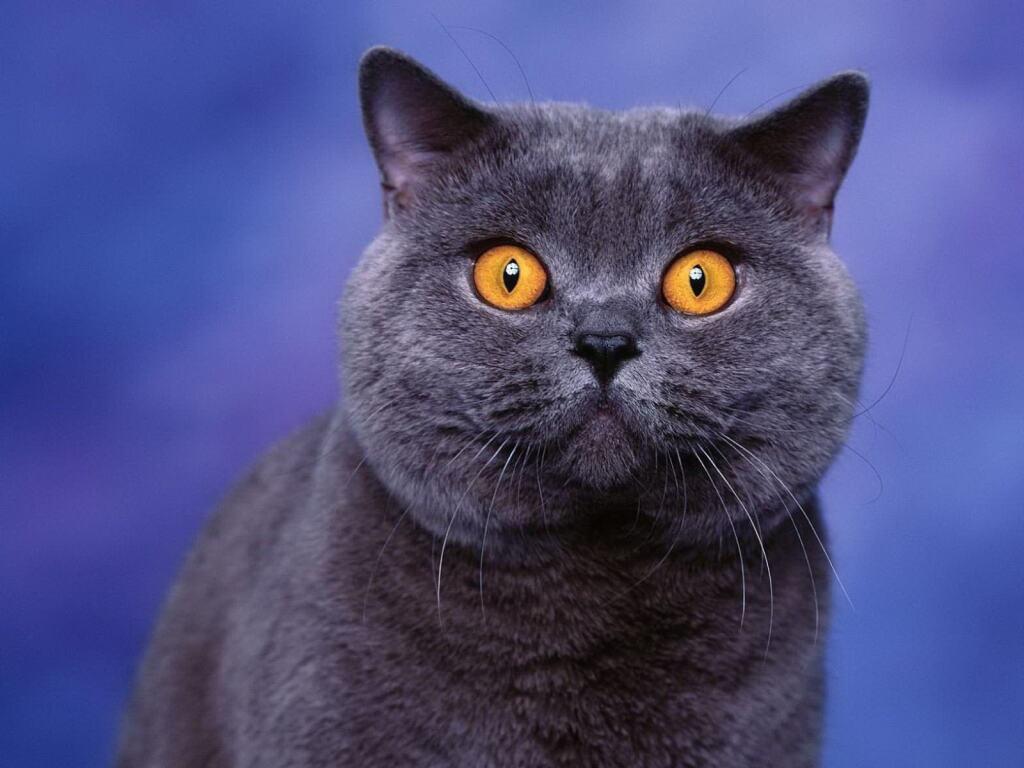 Все домашние животные в Российской Федерации будут промаркированы