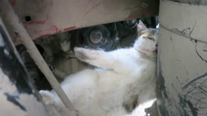 ВТюмени cотрудники экстренных служб вызволяли зажатого виномарке кота