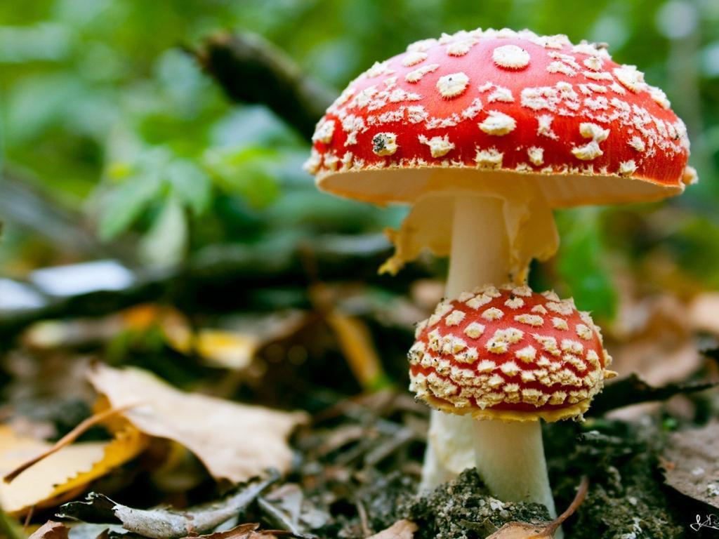 Тюменцам рекомендуют быть внимательнее при сборе грибов