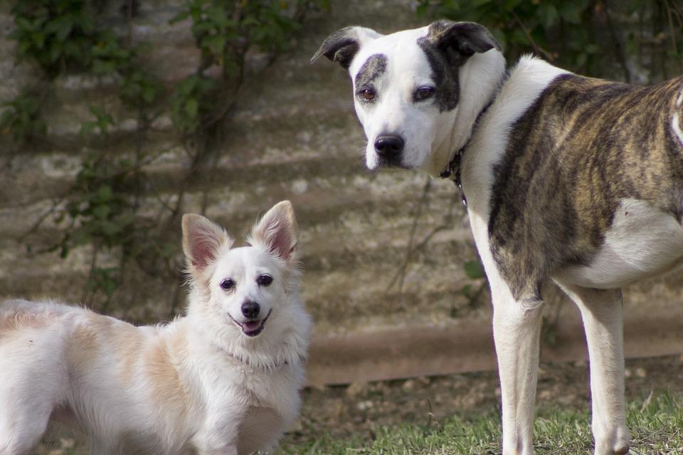 Уголовное дело завели натоболяка, натравившего пса наполицейского