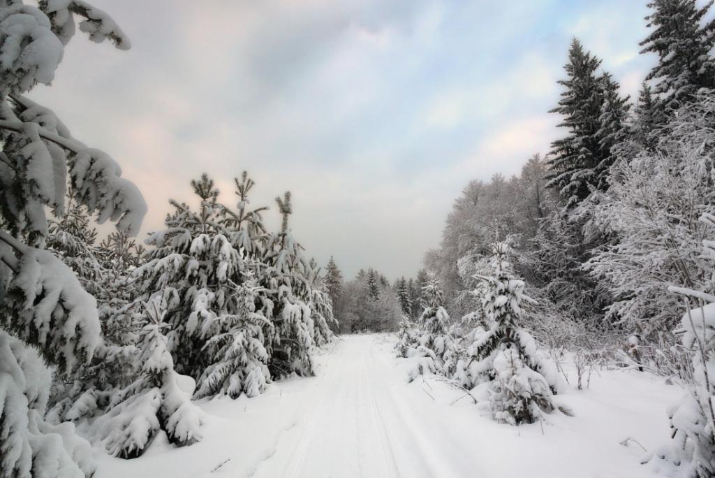 ВТюменском лесу задержали «черных» лесорубов