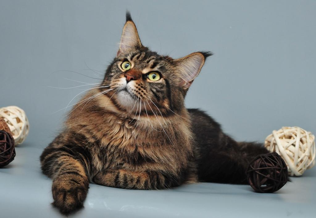 Жительница Тюмени выбросила сбалкона соседских кошек