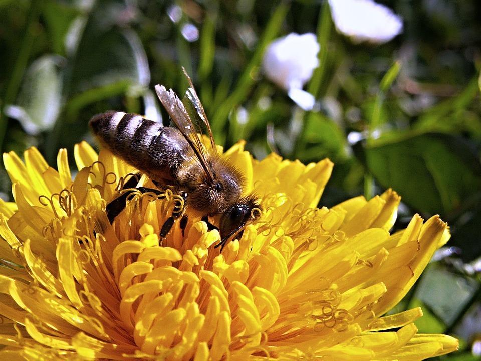 ВТюмени пчелы напали насемью, отца экстренно госпитализировали