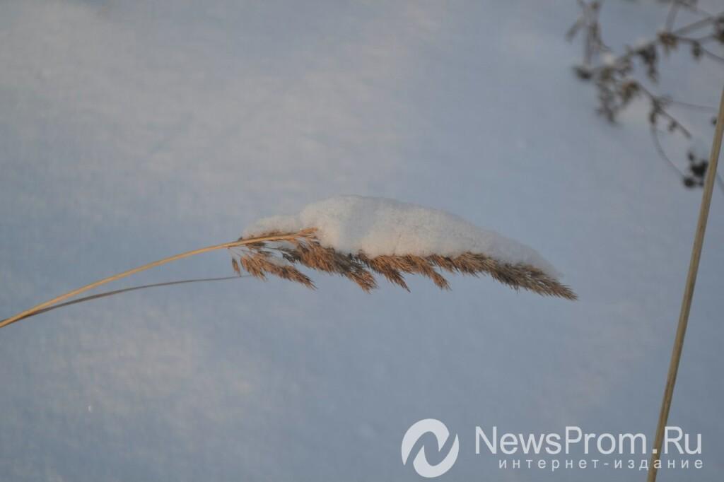 Погода в степном саратовская область советский район на 2