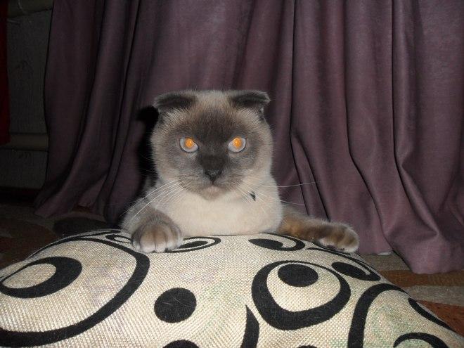 «Медиалогия» составила рейтинг котиков вСМИ загод