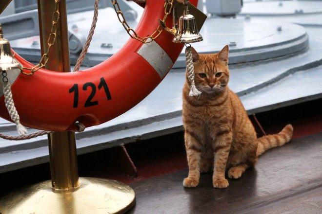 Кот Ахилл— самый известный котик в русских СМИ