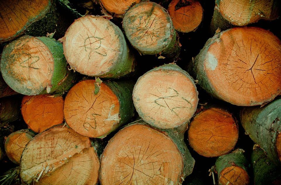 Тюменец нелегально вырубил сосны, причинив вред неменее 1 млн руб.
