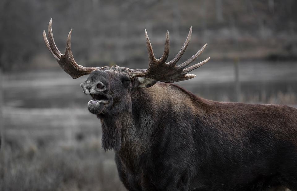 Натюменских браконьеров и«черных лесорубов» завели 303 «уголовки»