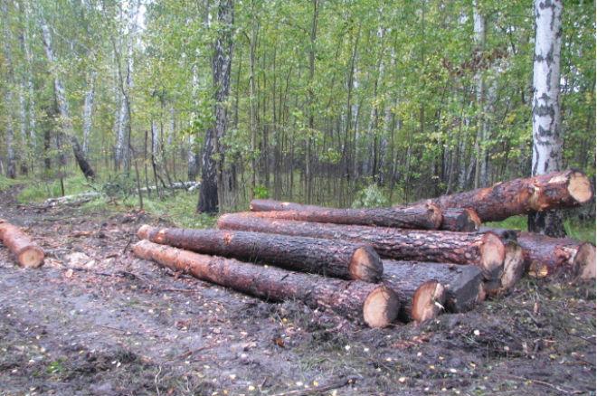 ВНижней Тавде фермер нелегально срубил деревья наполтора млн. руб.