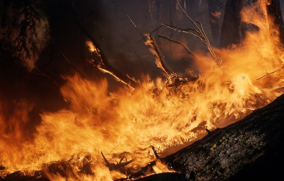 Тюменцы могут спасти лес отпожаров при помощи СМС имобильного приложения