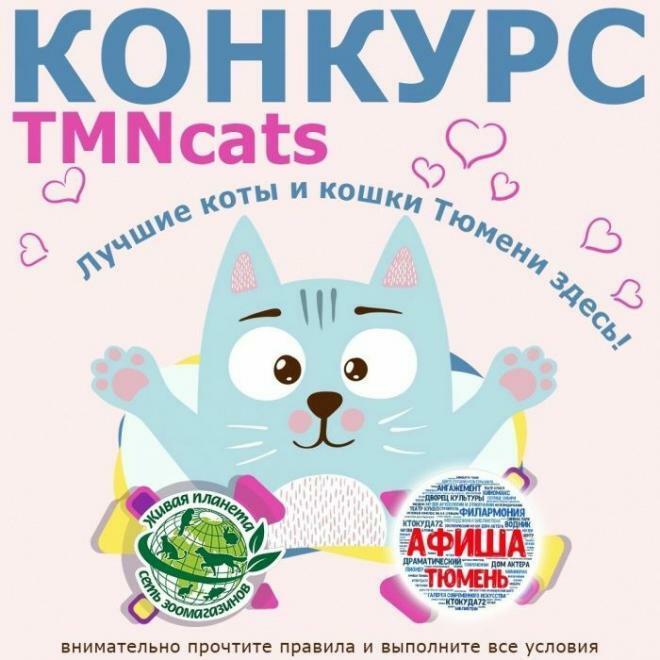 Тюменцы могут получить призы за фото своих котов и кошек