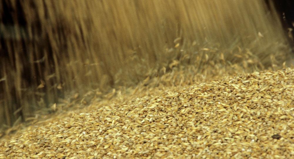 Тюменская область вышла влидеры поурожаю зерна