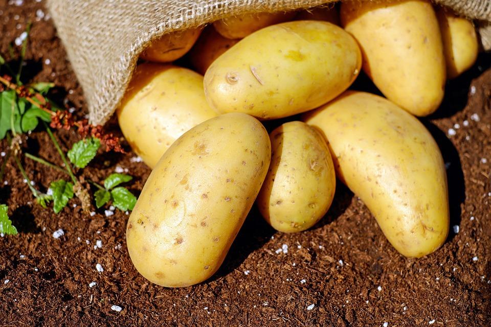 ВЯлуторовске организуют картофельные бои игонки накоровах