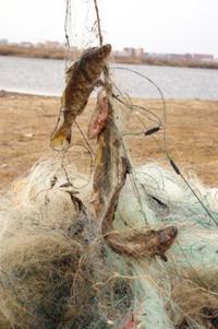 сеть рыболовная китайская как поставить
