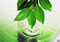 Вы поддерживаете деятельность экологических организаций?